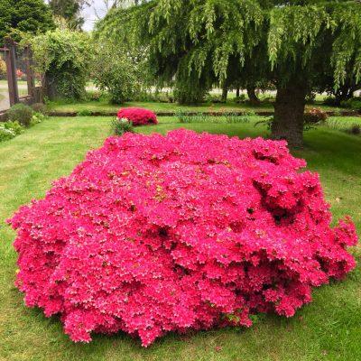 jardin_puerto_varas 3